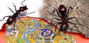 Ants and city