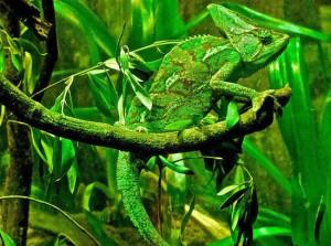 camouflaged-animals-13