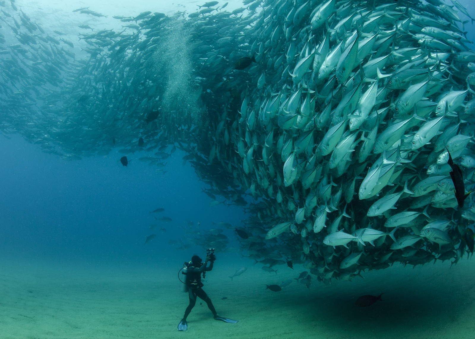 david-castro-with-a-swarm-of-bigeye-fish-at-cabo-pulmo-baja-california-sur-mexico-by-octavio-aburto