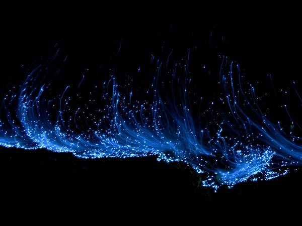 glowing-waves-bioluminescent-ocean-life-explained-close-up_50149_600x450