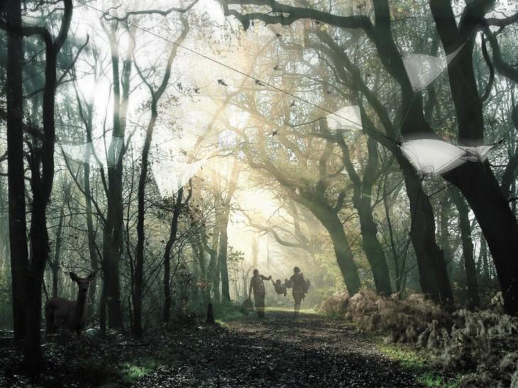 dusk forest hdr