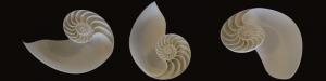 Parametric design_nature