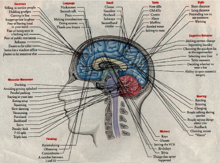 brain senses