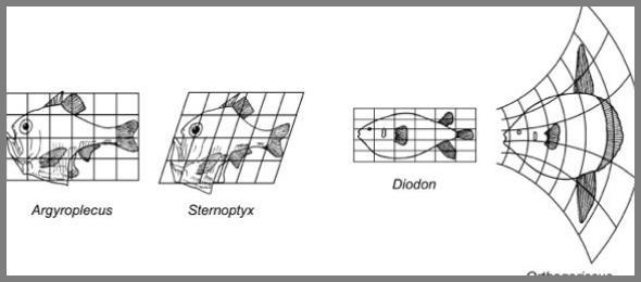 DIGITAL LOGICS - Growth and Form – IAAC Blog