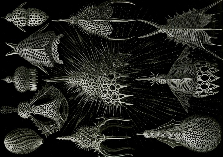 Image of Radiolaria from Christan Toche, Radiolaria Project, eCAADe 07 Conference Proceedings, Frankfurt, Germany