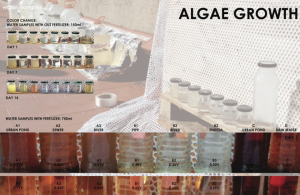 Growth of algae and energy production