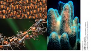 Superorganisms